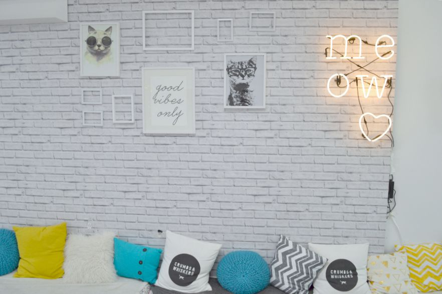 cat cafe in Washington D.C.- Crumbs & Whiskers